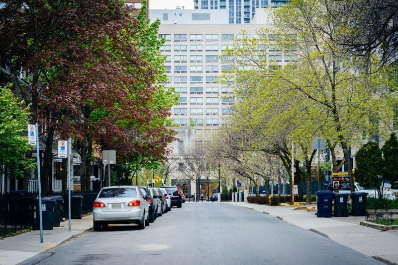Casas y color de la primavera en la calle de McGill, cerca de Ryerson Universit fotos de archivo libres de regalías