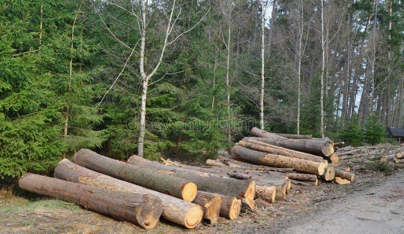 A casca besouro-contaminou ?rvores, madeira pronta para o transporte, Bo?mia sul fotos de stock