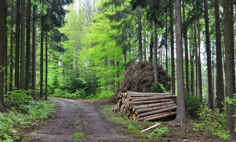 A casca besouro-contaminou ?rvores, madeira pronta para o transporte, Bo?mia sul imagem de stock royalty free