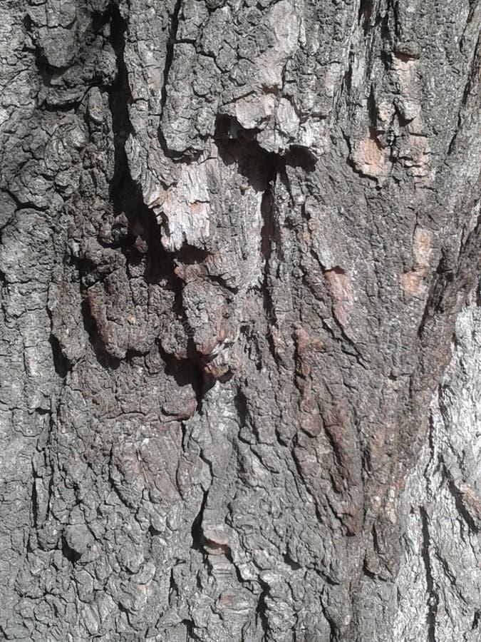Casca da árvore fotos de stock royalty free
