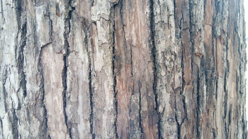 Casca da árvore imagens de stock royalty free
