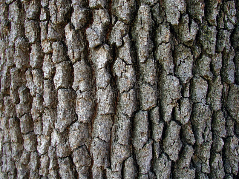 Casca de árvore imagem de stock royalty free