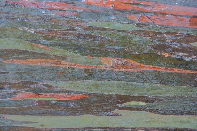 Casca de árvore imagens de stock