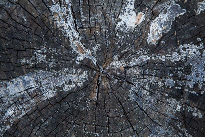 Casca de árvore bonita Fim acima fotos de stock royalty free