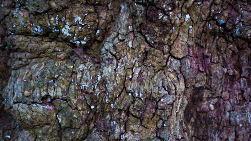 Casca de árvore colorida e Textured fotos de stock