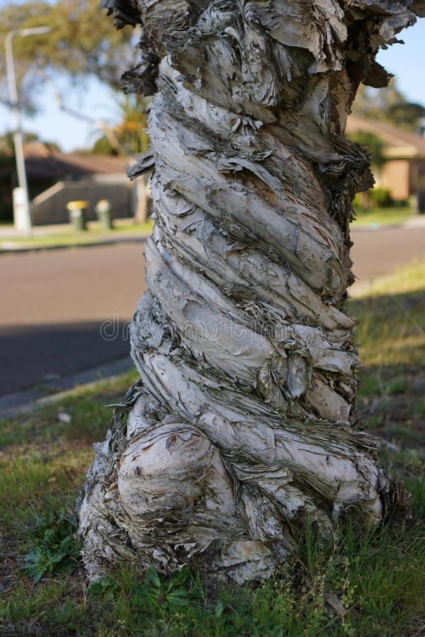 Casca de árvore com teste padrão torcido imagem de stock