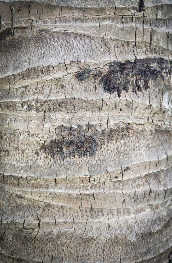 Casca de árvore do coco imagem de stock