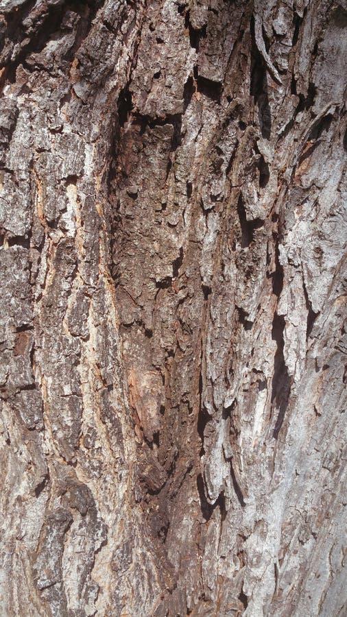 Casca de árvore envelhecida imagens de stock