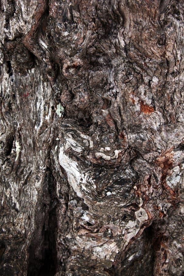 Casca de árvore de madeira incomum com testes padrões interessantes fotografia de stock royalty free