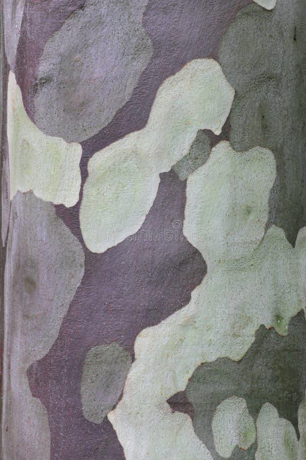 Casca de árvore modelada da goma fotografia de stock royalty free