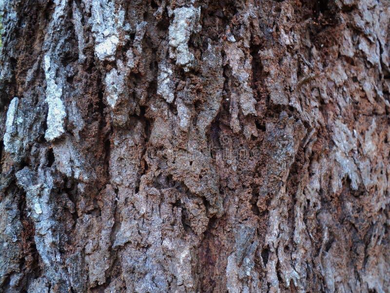 casca de árvore sob a forma do sumário fotografia de stock
