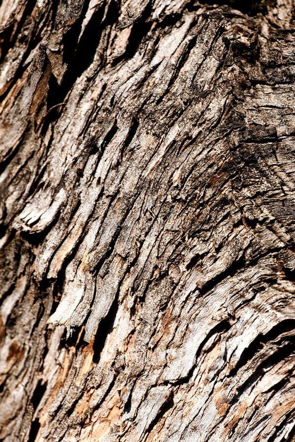 Casca de árvore. Textura de madeira foto de stock royalty free