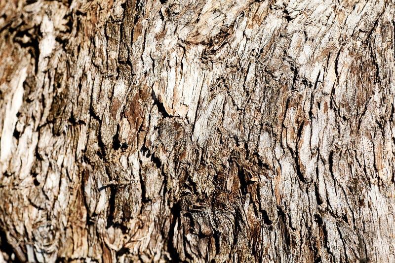 Casca de árvore. Textura de madeira foto de stock