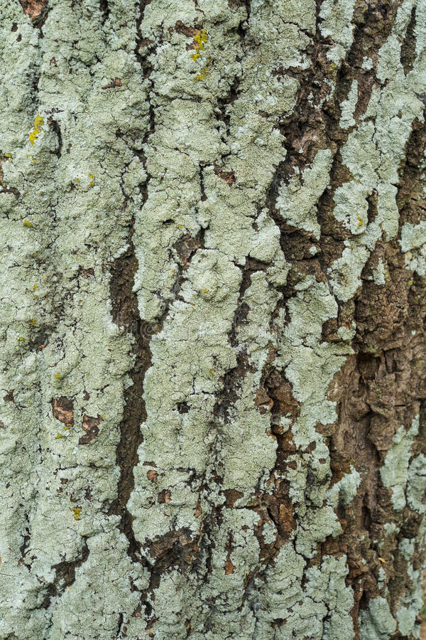 Casca de árvore verde foto de stock