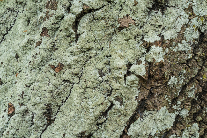 Casca de árvore verde imagens de stock