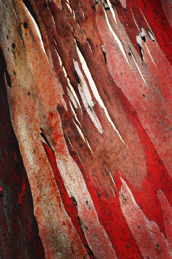 Casca de árvore vermelha imagem de stock royalty free