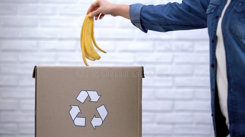 Casca de jogo da banana da pessoa no escaninho de lixo, desperdício orgânico que classifica, conscientização imagens de stock royalty free