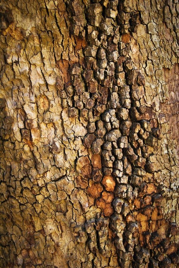 Casca de madeira abstrata da textura foto de stock