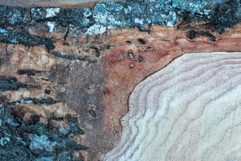 Casca de madeira do whit da textura fotos de stock royalty free