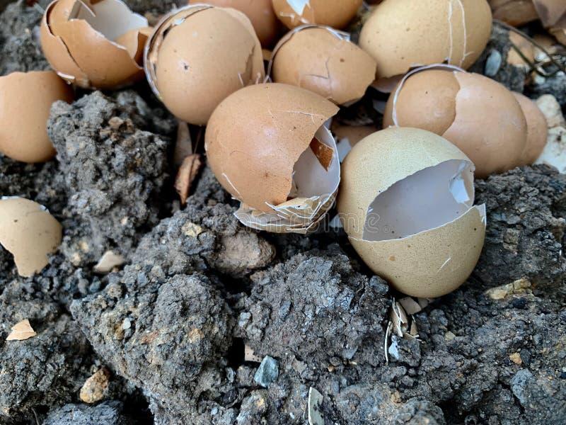 Casca de ovo rachada, distribuído na terra, adubo biológico fotografia de stock