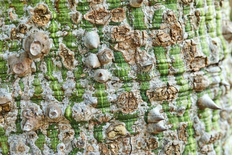Casca de ?rvore em tons marrons verdes imagem de stock