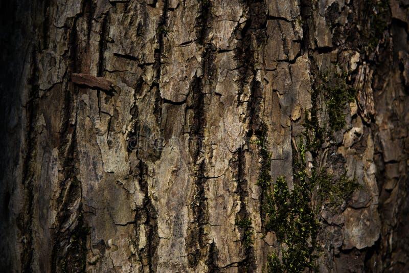A casca de uma ?rvore coberta com o musgo fotos de stock royalty free