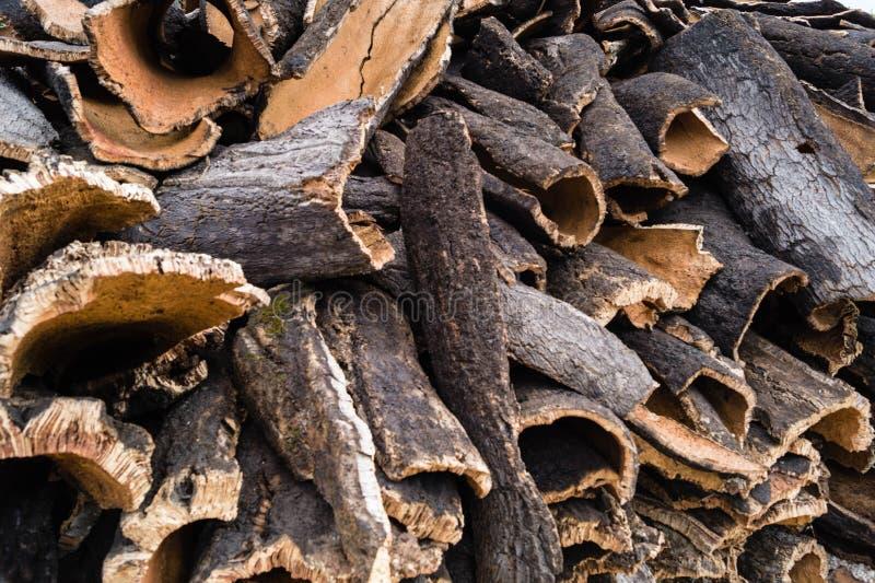 Casca do carvalho de cortiça imagem de stock