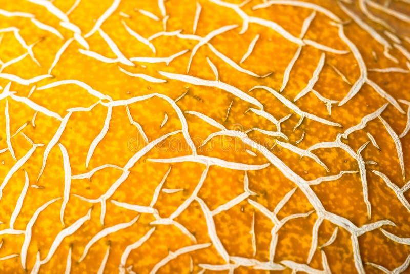 Casca do mel?o maduro, fundo abstrato amarelo, fotografia de stock