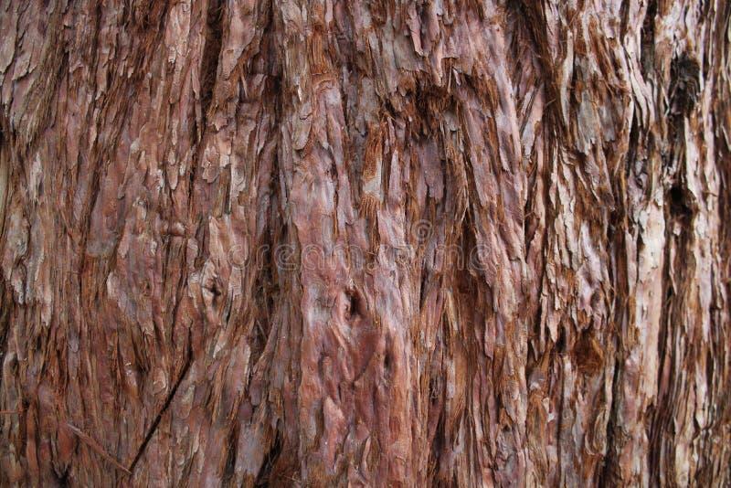 Casca do pinheiro bonito imagens de stock