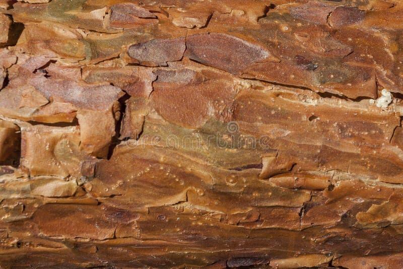 Casca do pinho como o fundo foto de stock