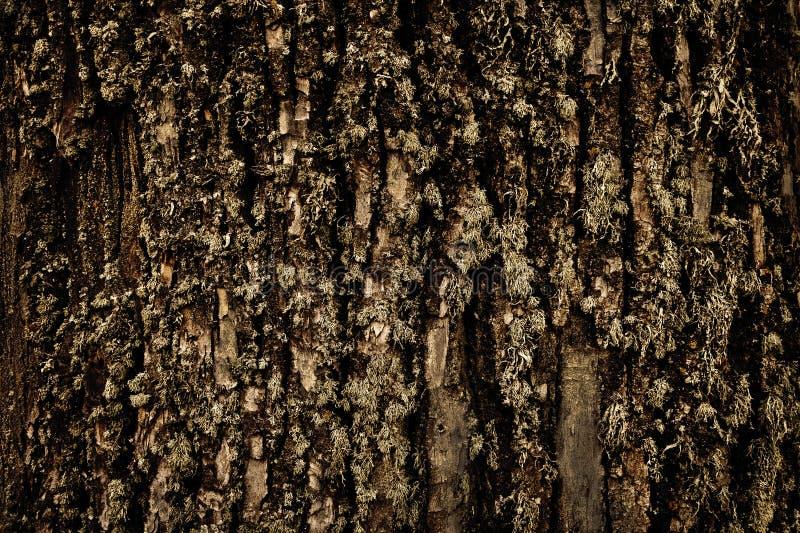 casca e musgo de árvore fotografia de stock