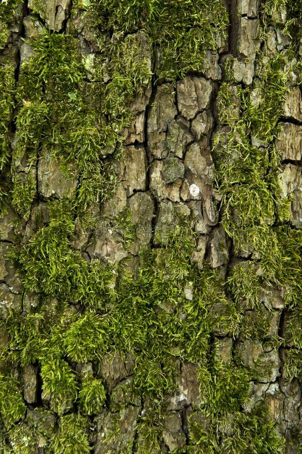 casca e musgo de árvore foto de stock royalty free