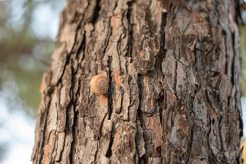 Casca marrom Textured da árvore sul grande fotografia de stock
