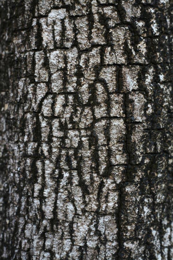 Download Casca na árvore imagem de stock. Imagem de proteção, paralela - 16873679