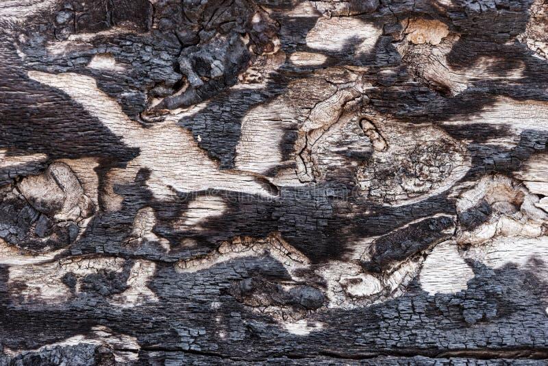 Casca preta queimada com superfície interessante fotos de stock royalty free