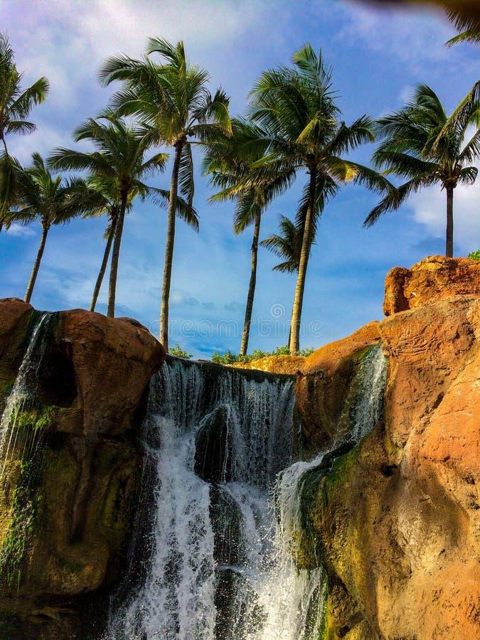 Cascada con las palmeras foto de archivo