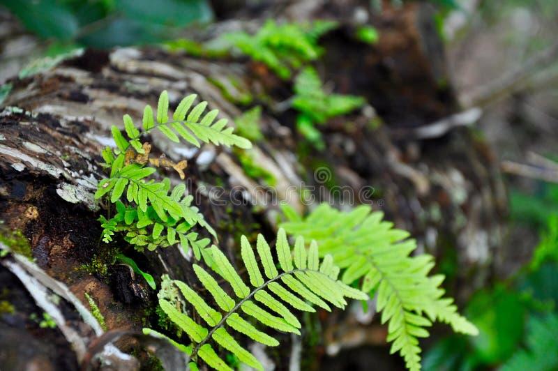 Cascada de Cibodas, flor imagenes de archivo