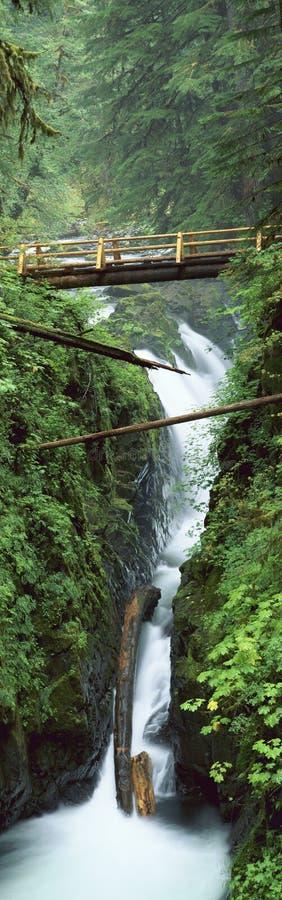 Cascada del solenoide Duc, parque nacional olímpico, WA foto de archivo libre de regalías