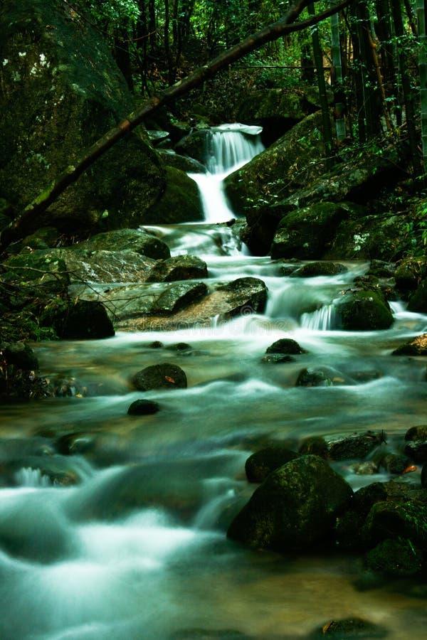 Cascada en bosque fotos de archivo libres de regalías