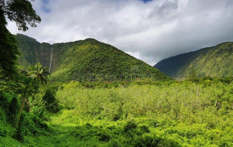 Cascada en el valle de Waipio imagen de archivo libre de regalías