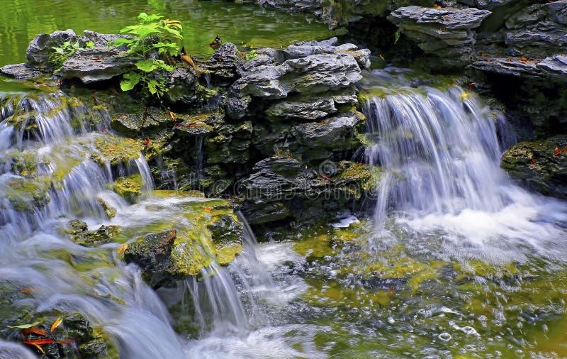 Cascada en jardín tropical fotografía de archivo