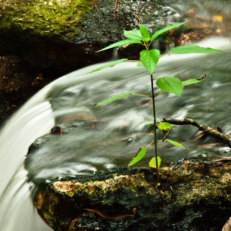 Cascada en Kanapaha fotografía de archivo libre de regalías