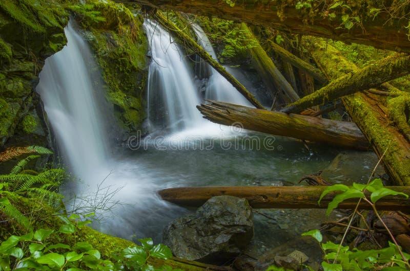 Cascada en la cala de Murhut en bosque del Estado olímpico en el estado de Washington imagen de archivo libre de regalías