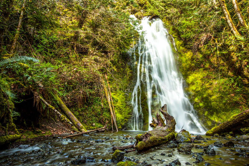 Cascada en la selva tropical, parque nacional olímpico foto de archivo