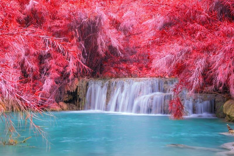 Cascada en la selva tropical (Tat Kuang Si Waterfalls fotos de archivo libres de regalías