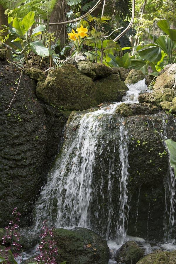 Cascada en las zonas tropicales con las orquídeas amarillas y las rocas cubiertas de musgo imagen de archivo libre de regalías