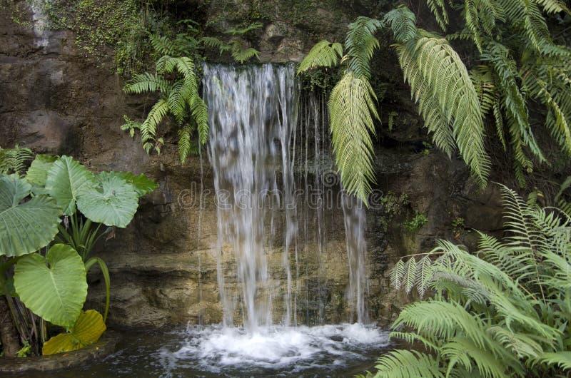 Cascada en tierra tropical foto de archivo