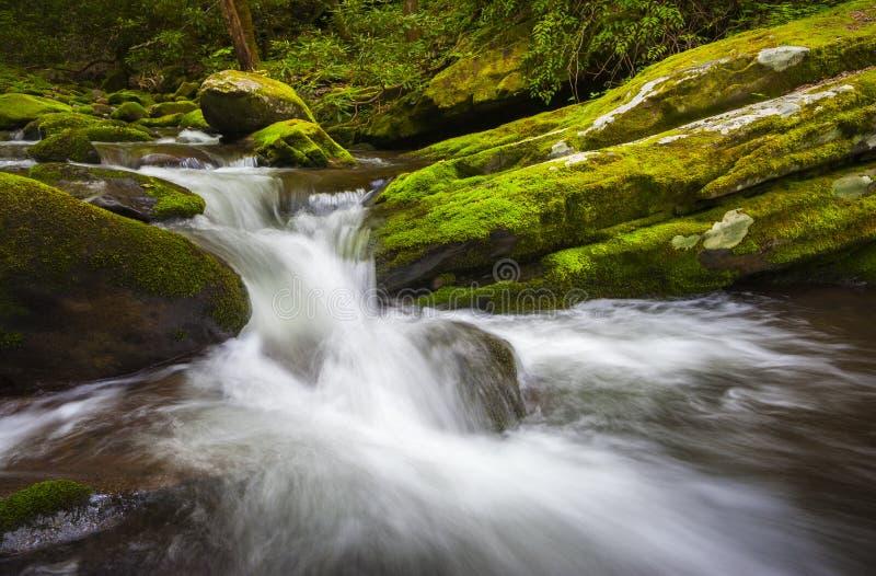 Cascada Gatlinburg TN del parque nacional de Great Smoky Mountains de la bifurcación del rugido foto de archivo libre de regalías