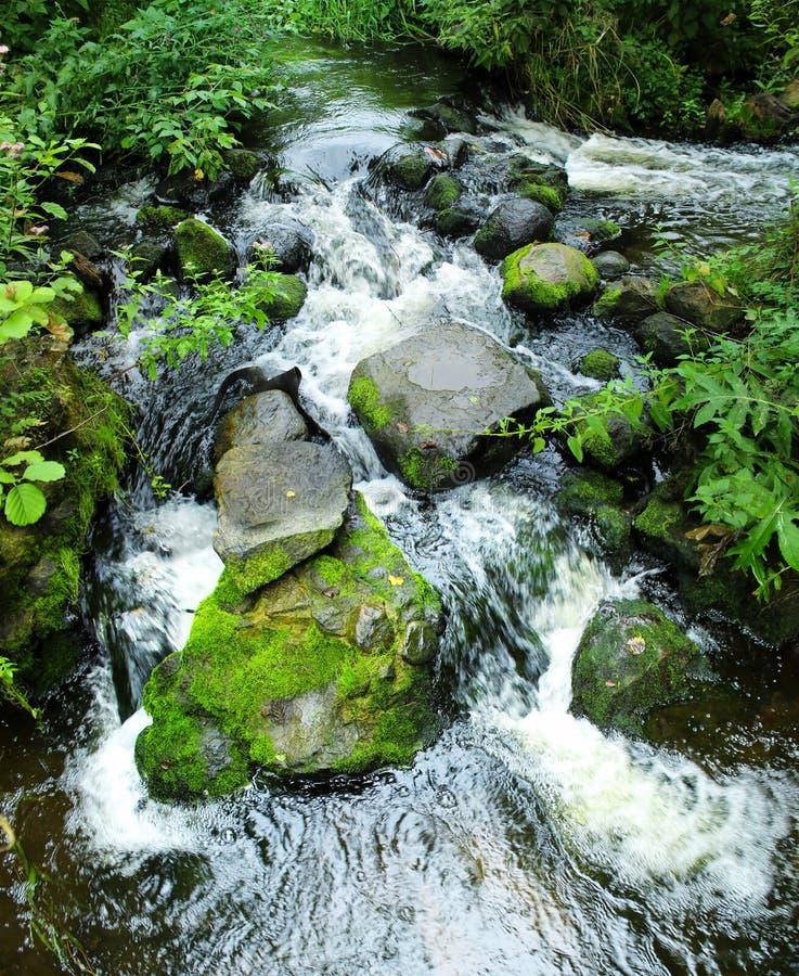 Cascada hermosa de la montaña en bosque verde foto de archivo