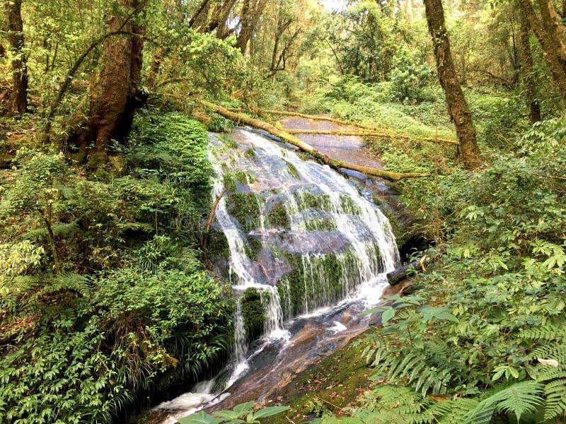 Cascada hermosa del paraíso de cabeceras en la selva del verde de la naturaleza fotografía de archivo